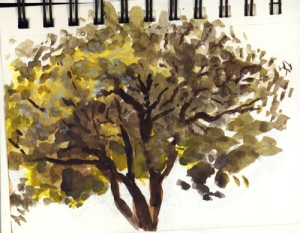 watercolor_tree_sept17