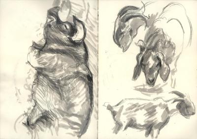 SF2014_goats