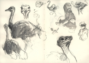 SF2014_ostrich