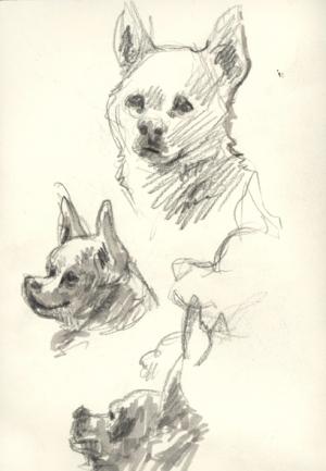 chihuahua_sketch