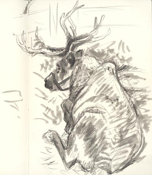 reindeer_sketch
