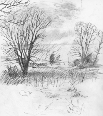 wintertrees2
