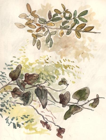 leafstudies_penandink
