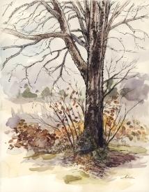 penandink_tree_1_21_2015