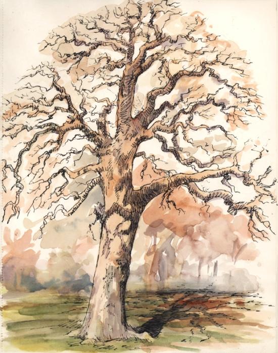 penandink_tree_gvsprings