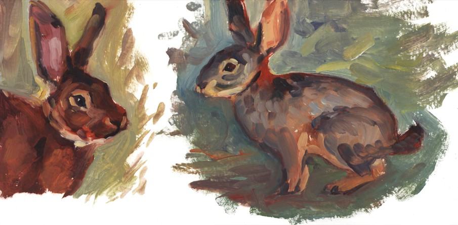 rabbitstudies