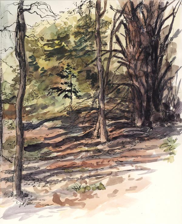 woods_penandink