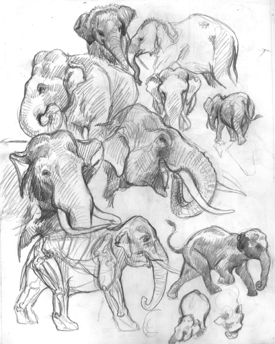 elephantsketches