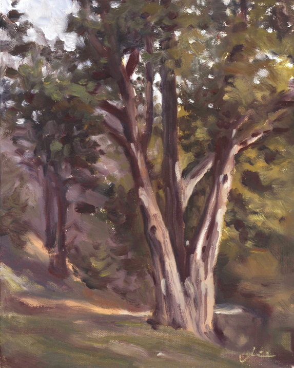 GVS_tree_pleinair