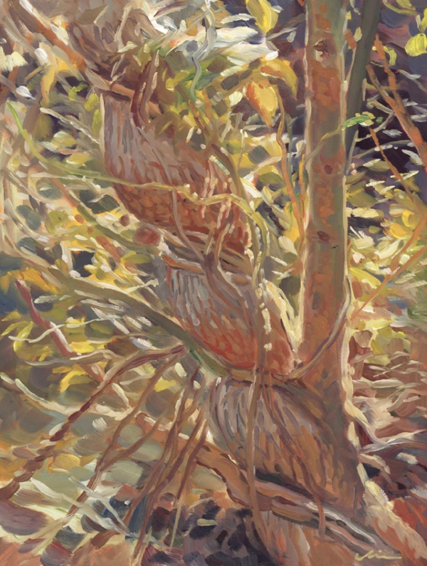 constrictedtree_pleinair