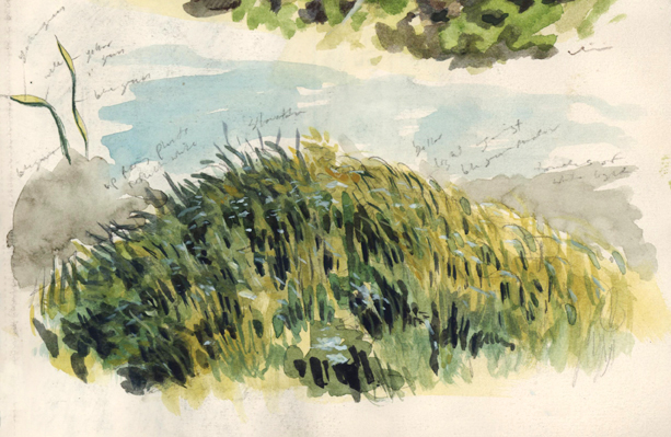 grassyhill_watercolor