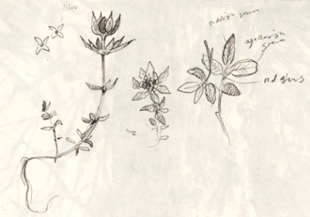 littleplant_sketches_march15