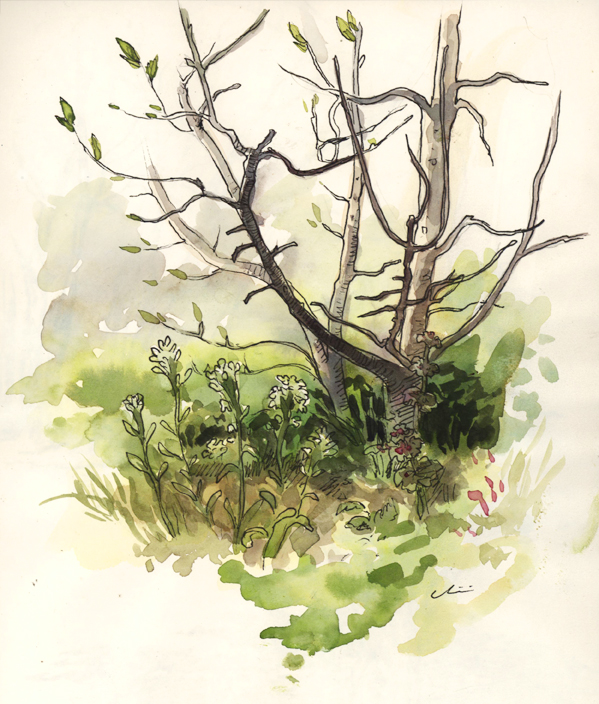 springgrasses_penandink