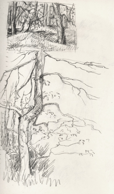 trees_sketch_march15