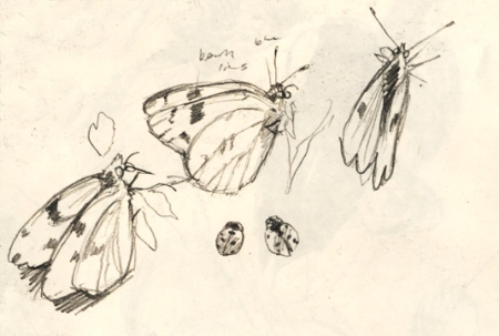butterfly_sketch_april15