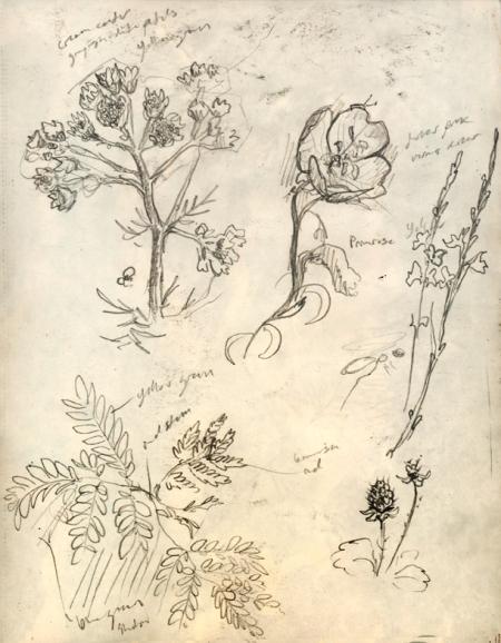 Image (431)