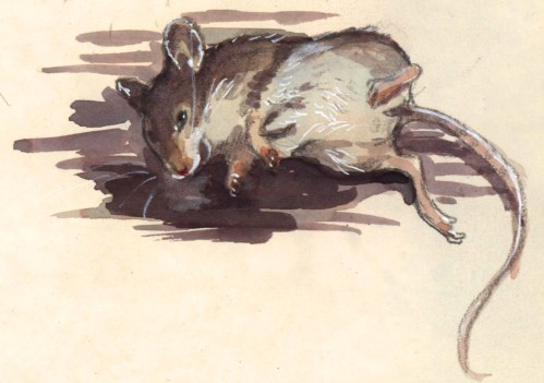mousestudy_color