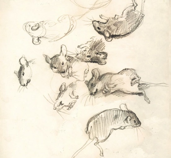 mousestudy_sketch