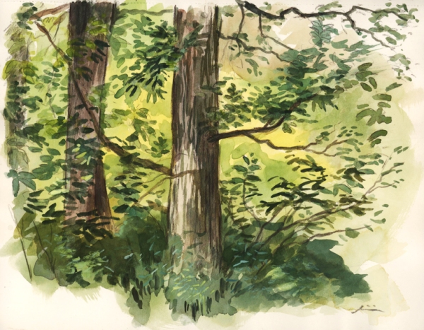 treelayers_pleinair_watercolor