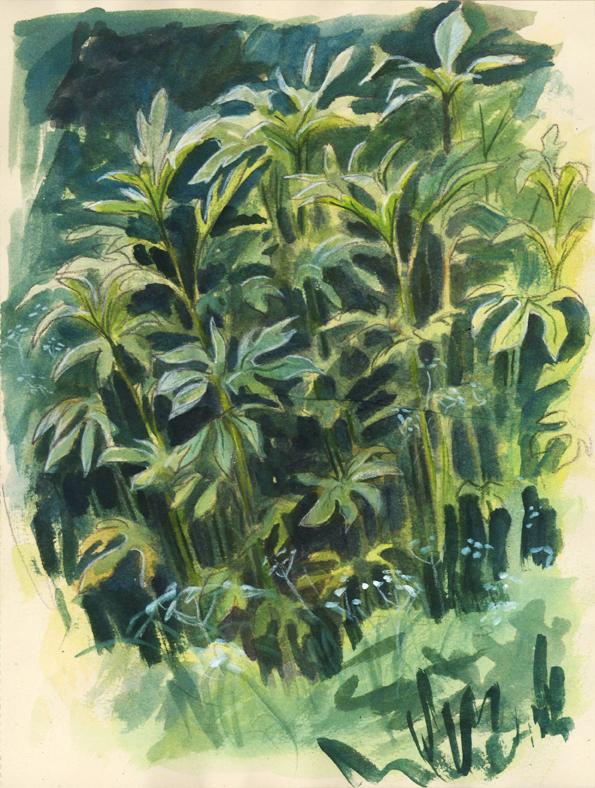 tallstems_watercolor_may15