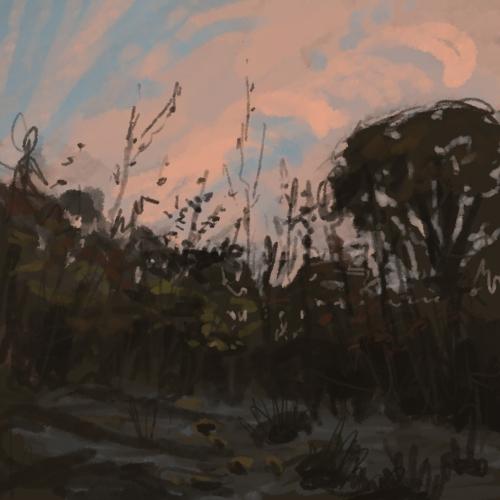 december1st_sunsetgrass