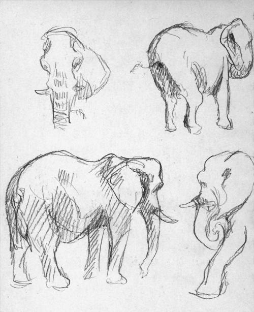 dallaszoo_feb16_elephants