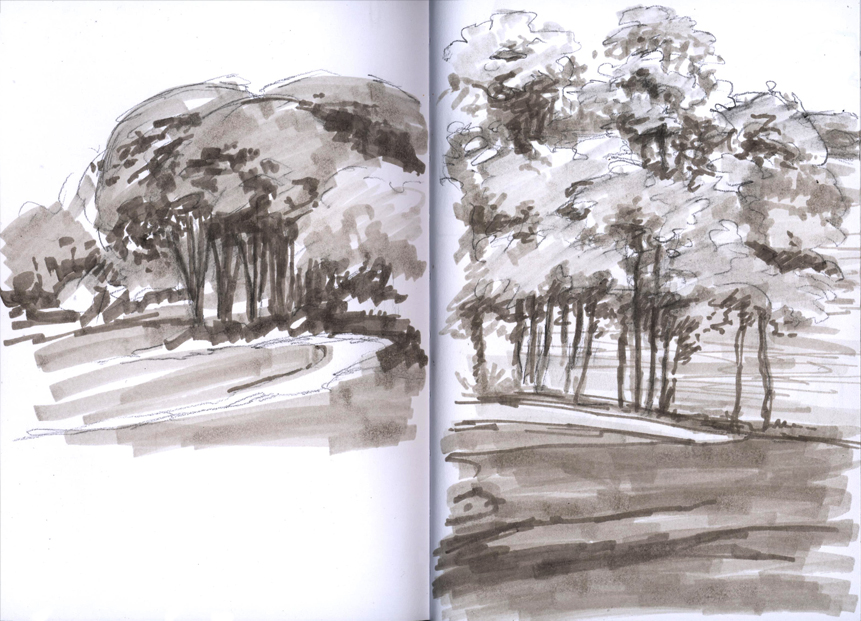 greyscale_arboretumtrees_may16