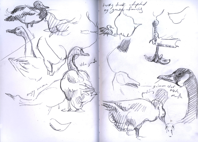 jayceeparkducks_sketches
