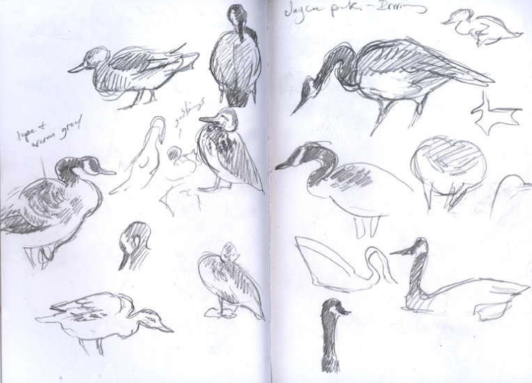 jayceeparkducks_sketches2