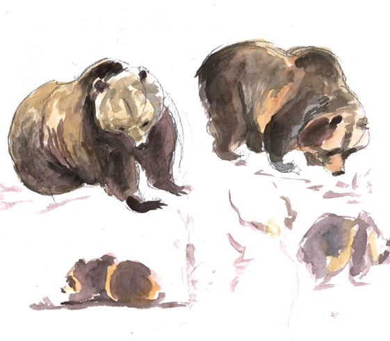 watercolor_bears