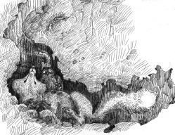 foxowlsquirrelwren_underground