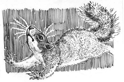 paranoidsquirrel